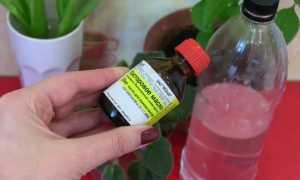 Как использовать касторовое масло для роз? Применение касторки для цветения комнатных растений