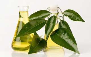 Камфорное масло: для чего применяется в народной медицине и домашней косметологии