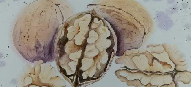 Ароматное масло грецкого ореха: для чего его можно использовать?