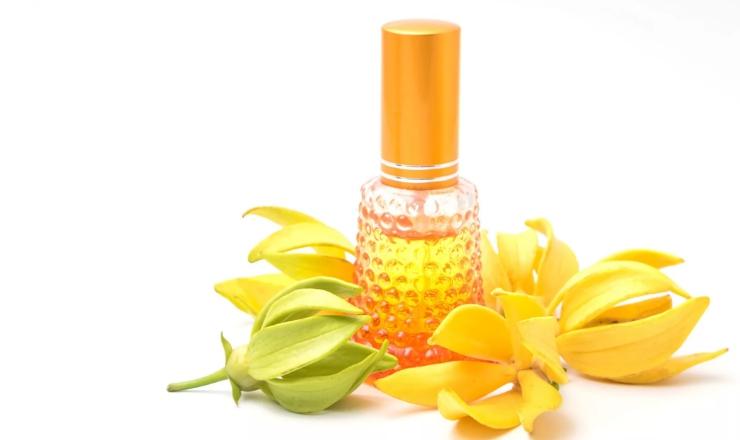 цветки и масло иланг-иланг