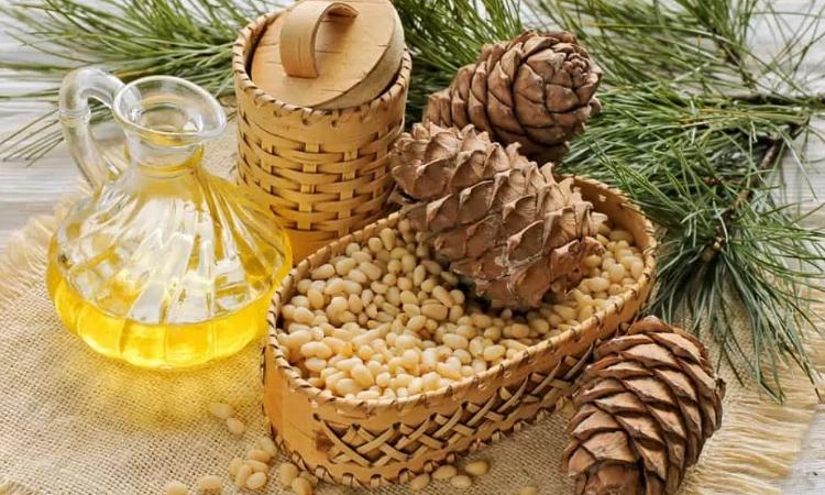 Натуральное масло кедровых орехов