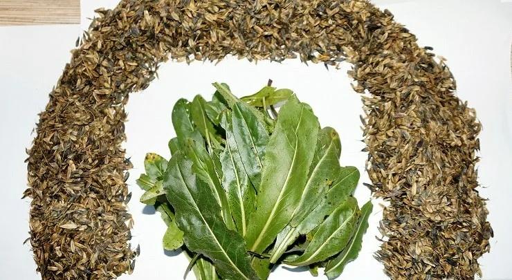 Семена и листья усьмы