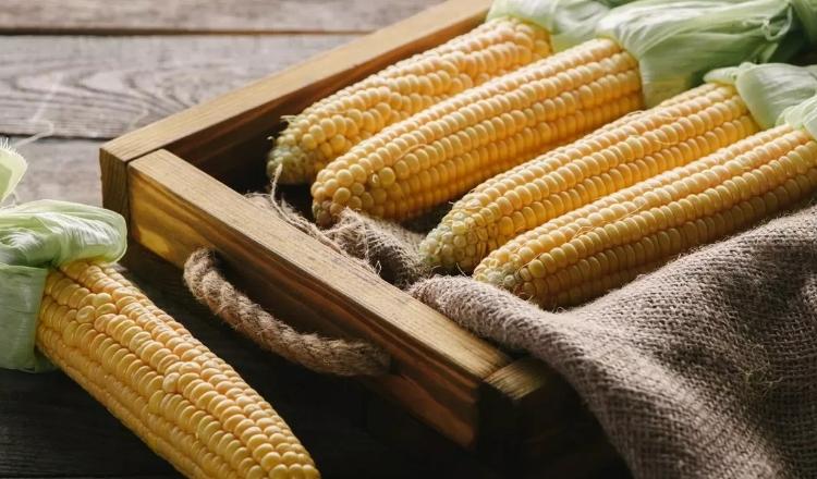 Кукурузное масло нерафинированное - польза и вред